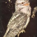 Bolivar, Urutau Tagschlaffer's avatar