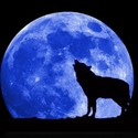 Blue moon wolf full large