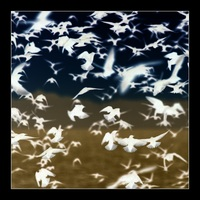 Murmurations by Cave Street