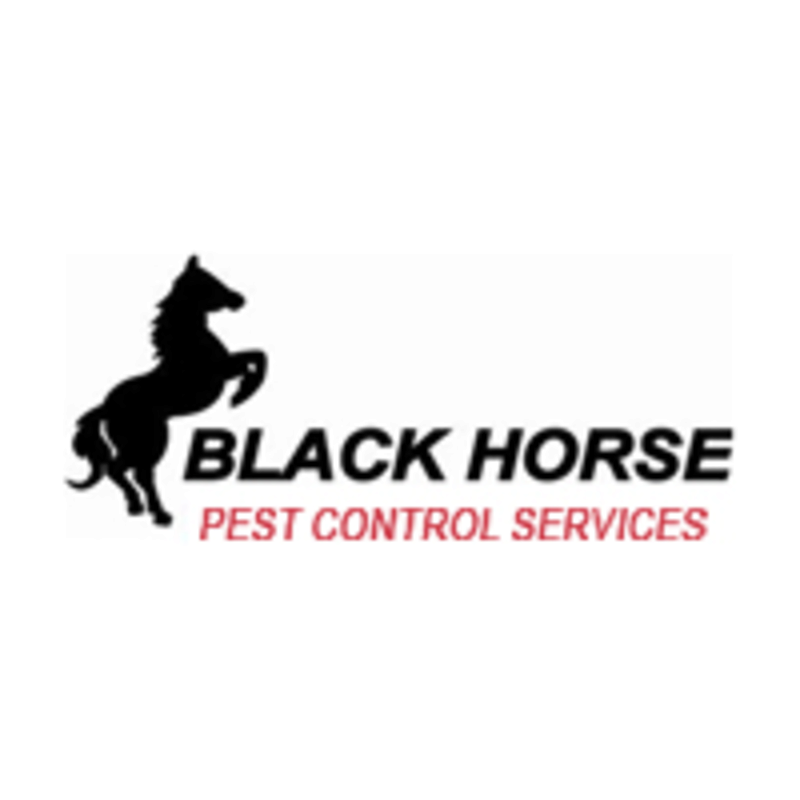 blackhorsepestcontrol's avatar